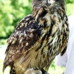 5 Unknown facts about Eagle Owl